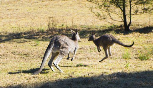 オーストラリア、セブ島、カナダでの楽しい留学体験!成功する秘訣